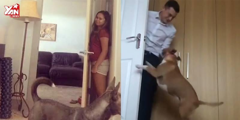 Cười ra nước mắt khi các chú cún cưng chơi trốn tìm