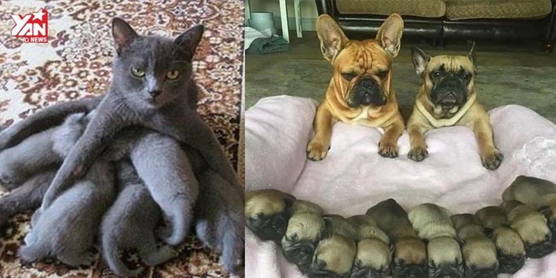 """Cười đau bụng với những gia đình chó mèo """"vỡ kế hoạch"""""""