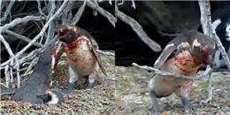 Dân mạng 'khóc một dòng sông' trước màn đánh ghen của cánh cụt chồng