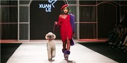 Chi Pu đội tóc giả, dắt cún Poodle 'dạo chơi' trên sàn catwalk