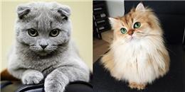Cùng chấm điểm 16 đại diện tiêu biểu của 'cuộc thi sắc đẹp' loài mèo