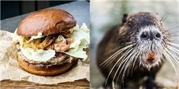 Bánh mì kẹp thịt chuột đang tạo nên cơn sốt ở nước Nga
