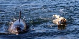 Cảm động chú chó bơi ra biển mỗi ngày chỉ để gặp bạn thân cá heo