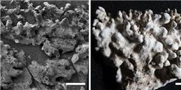 Những bằng chứng vững chắc đầu tiên về sự sống trên 'hành tinh đỏ'