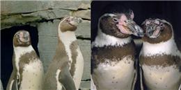 Cặp đôi cánh cụt đồng tính hạnh phúc kỷ niệm 10 năm yêu nhau