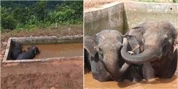 Cảm động cả đàn voi cứu voi con mắc kẹt giữa hồ nước suốt 2 ngày