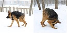 Đáng thương chú chó bị dị dạng mà bị ngỡ là Photoshop đùa vui