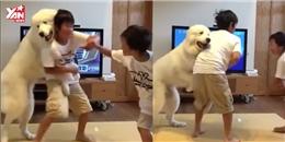 Chết cười với chú chó làm 'trưởng ban hoà giải' cho 2 anh em