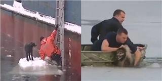 Đoàn người giải cứu chú chó kẹt giữa lớp băng dày giá lạnh
