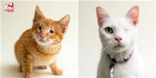 Bộ ảnh những chú mèo mù gây xúc động mạnh