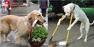Choáng với độ thông minh của chú chó giúp việc