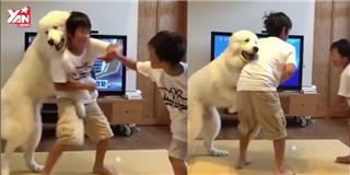 Chết cười với chú chó làm  trưởng ban hoà giải  cho 2 anh em