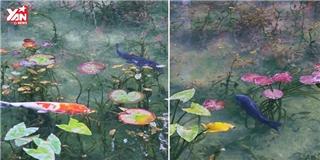 Ngỡ ngàng với tuyệt tác hồ cá đẹp như phối cảnh 3D ở Nhật Bản