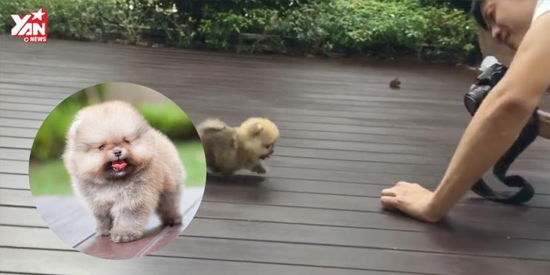 Tan chảy với hậu trường chụp ảnh của chú chó tí hon