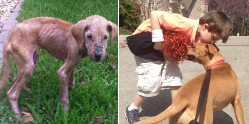 Cảm động chú chó nhỏ giúp cậu bé tự kỉ hòa nhập cuộc sống