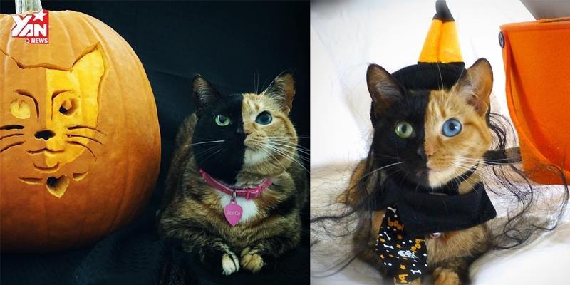 Giải mã hiện tượng cô mèo 2 mặt từng gây sốt