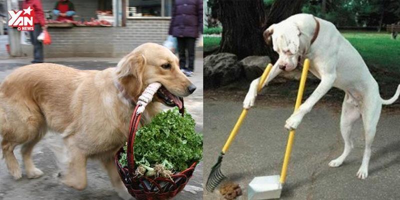 """Choáng với độ thông minh của """"chú chó giúp việc"""" Hàn Quốc"""