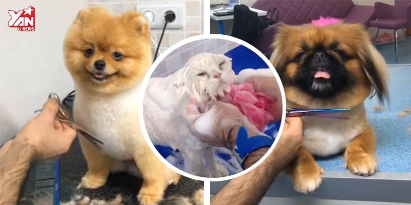 Thích thú với phản ứng của thú cưng khi đến salon làm đẹp