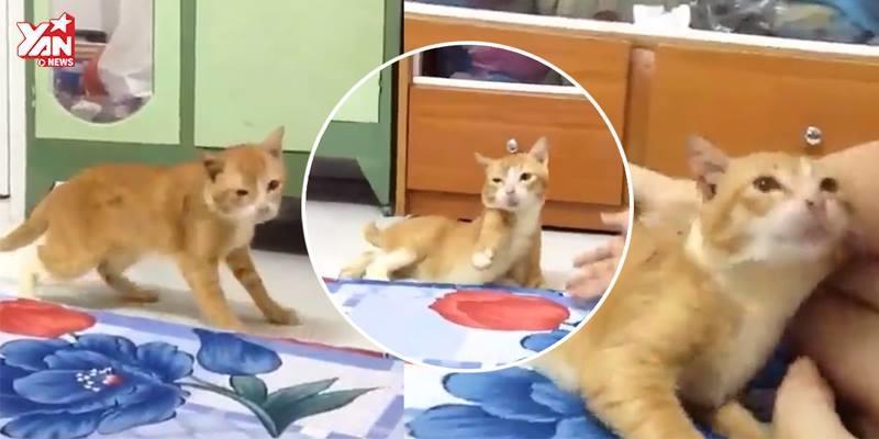Rơi nước mắt với đoạn clip về chú mèo động kinh gây xúc động