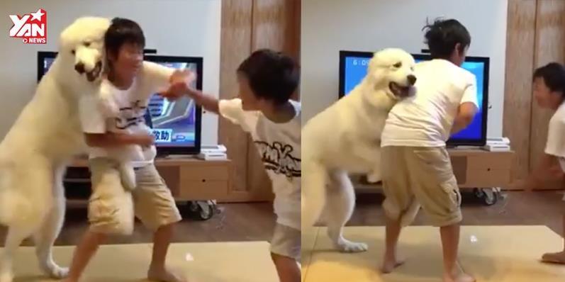 """Chết cười với chú chó làm """"trưởng ban hoà giải"""" cho 2 anh em"""