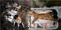 Kẻ giả danh yêu động vật để giết thịt hàng trăm con mèo gây phẫn nộ