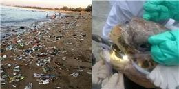 Rơi nước mắt với cảnh chú rùa đau đớn tột cùng vì nuốt phải rác