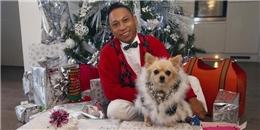 'Nhận' 135 triệu tiền quà, chú chó hạnh phúc nhất Noel năm nay là đây