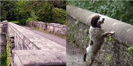 Giải mã bí mật về cây cầu kì lạ khiến hơn 600 chú chó lao xuống tự tử