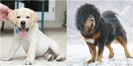 'Lóa mắt' trước những loài thú cưng đắt đỏ nhất thế giới