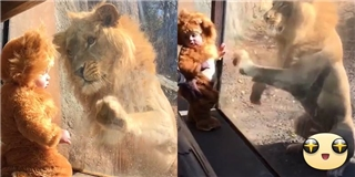 Vua sư tử bị chinh phục hoàn toàn trước em bé thiên thần