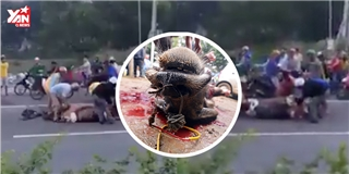 Cảnh người dân  hôi  thịt trâu chết giữa quốc lộ gây phẫn nộ