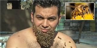 Người đàn ông tìm thấy lợi ích của việc cho ong bám vào cằm
