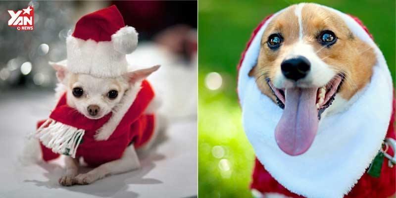 """Đừng quên sắm """"bộ cánh"""" cho Boss khi Giáng Sinh về"""