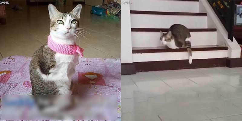 Chú mèo này sẽ khiến bạn thêm trân trọng cuộc sống của mình