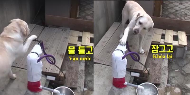 """Đây không phải là con chó, mà là một con """"siêu chó"""""""