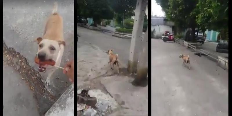 Hành động của chó mẹ khiến người xem nổi da gà