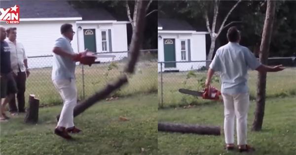 Người đàn ông hoảng hốt khi chặt mãi mà cây không chịu ngã