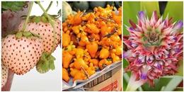 Ngắm 'nhan sắc trời sinh' của các loại trái cây 'độc lạ' chưng Tết