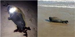 Đây là hình phạt dành cho những người đánh chết hải cẩu ở Bình Thuận?