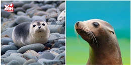 Giỏi sinh học đến mấy cũng khó phân biệt hết các loài động vật này
