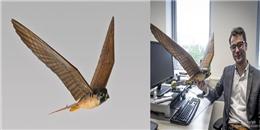 Thích thú với giải pháp dùng chim giả để bảo vệ sân bay