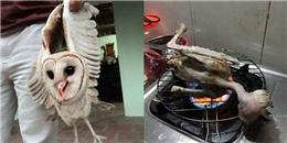 Dân mạng phẫn nộ với hành động bắt và nướng chim lợn trên bếp gas