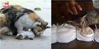 Chú mèo nhất định không rời xa bạn đã chết