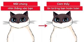 Bạn có biết mèo cũng có ngôn ngữ riêng?