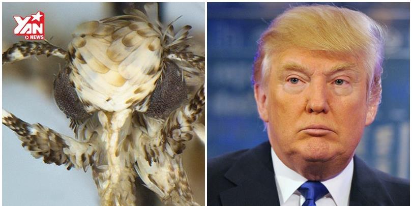 """Loài bướm đêm mới được đặt tên """"ăn theo"""" Donald Trump"""
