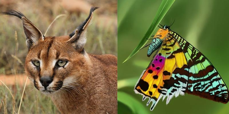 Ngỡ ngàng với 10 loài động vật đẹp nhất thế giới