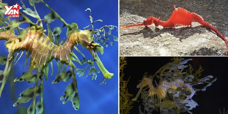 Cận cảnh loài động vật dưới nước được cho là Rồng