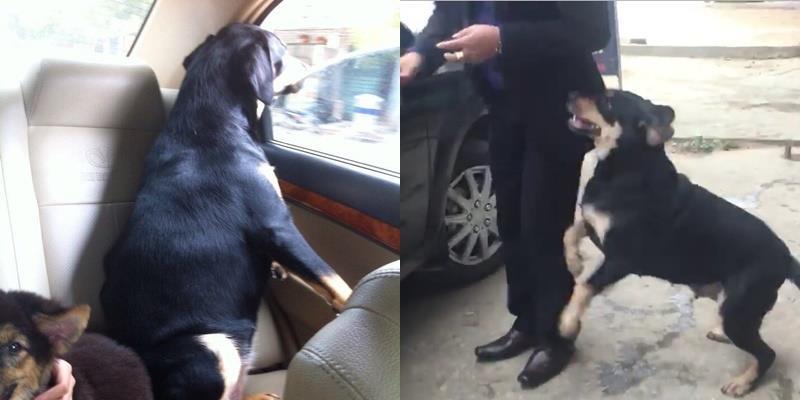 Xúc động trước cuộc gặp gỡ giữa chú chó và chủ cũ sau một năm xa cách