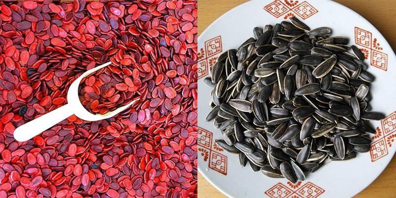 Mùa Tết, coi chừng 5 loại hạt thường bị nhúng hóa  chất độc hại nhất!