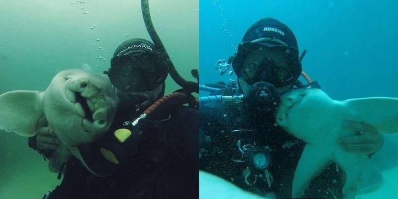 Lạ kì tình bạn 7 năm của chàng trai trẻ và chú cá mập